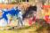 Côte-d'Ivoire : Festival des arts de la rue d'Assouindé (Fara)